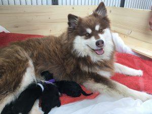 Nunna with puppies