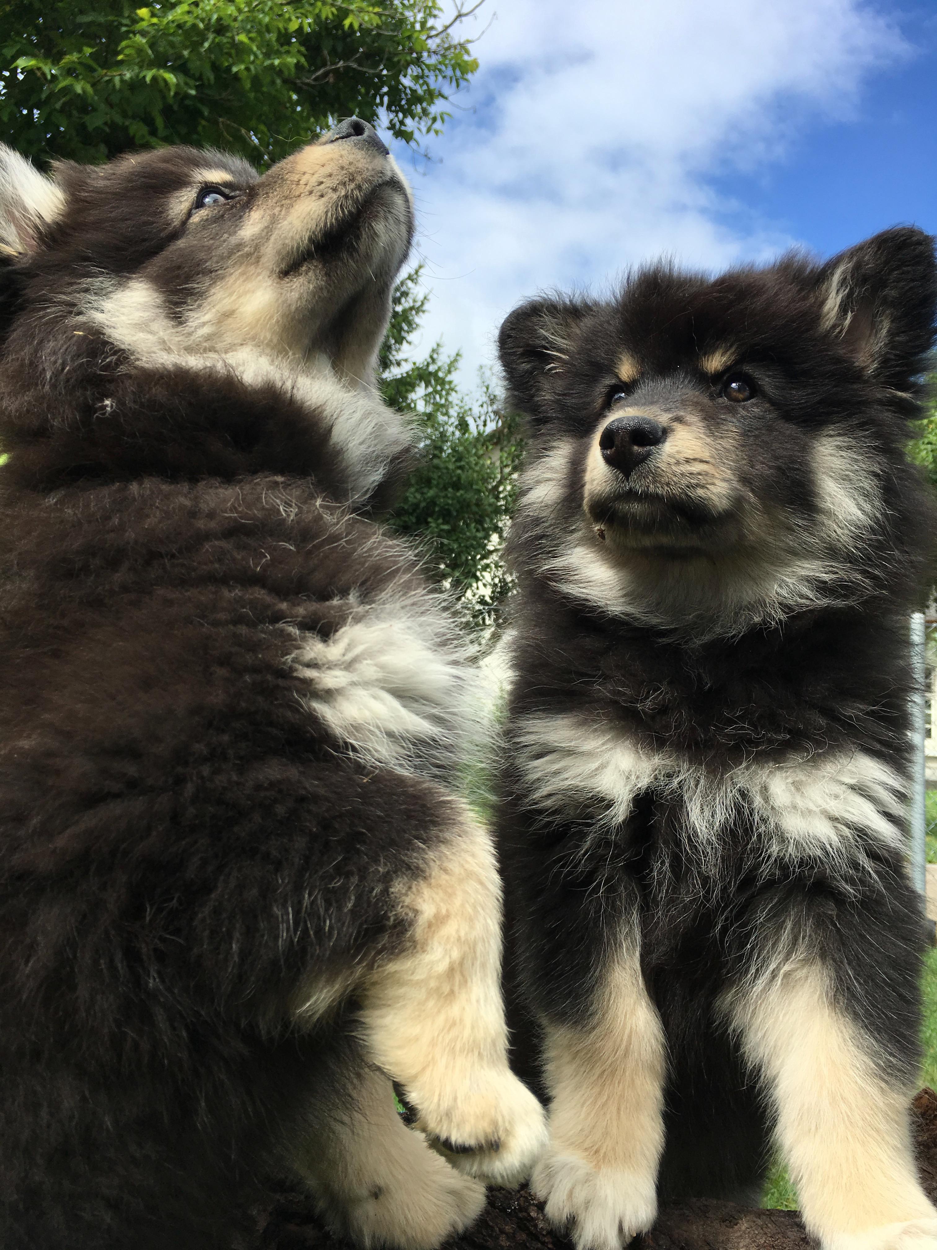 Kyllikki und Keeva