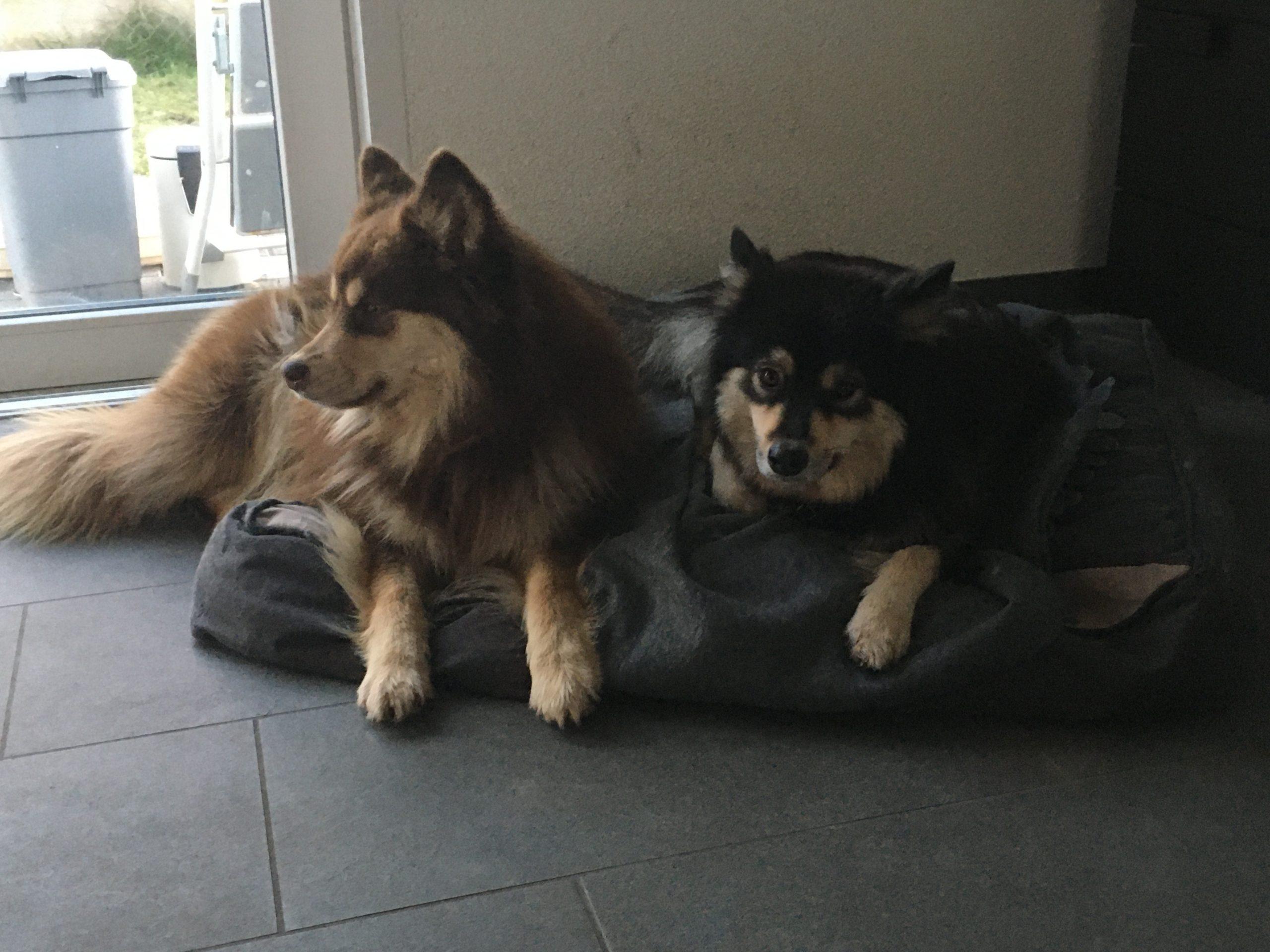 Laikku & Kaysa
