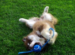 Nunna as a puppy